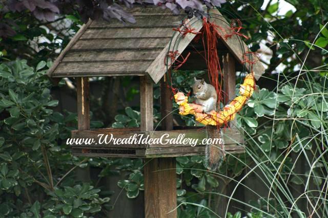 Corn cob wreath for your backyard friends