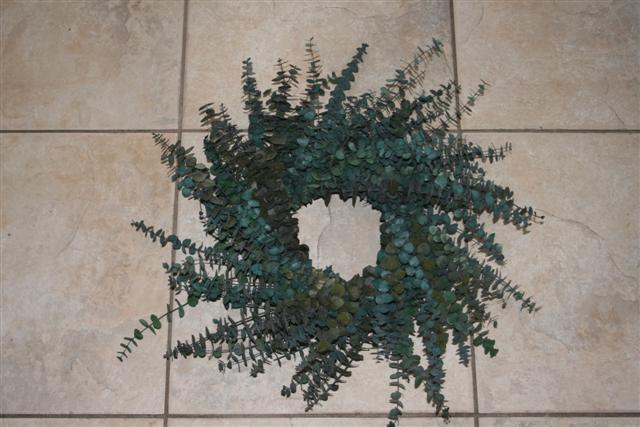 Eucalyptus Wreath form